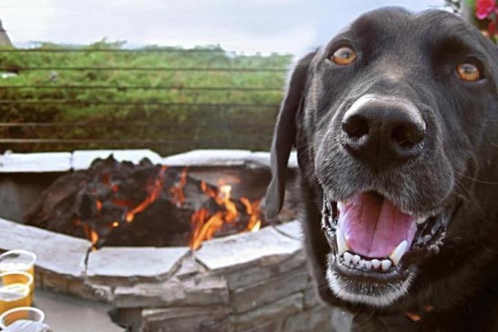 Warm Fido's Bones Around the Fire Pit at These Pet-Friendly Restaurants