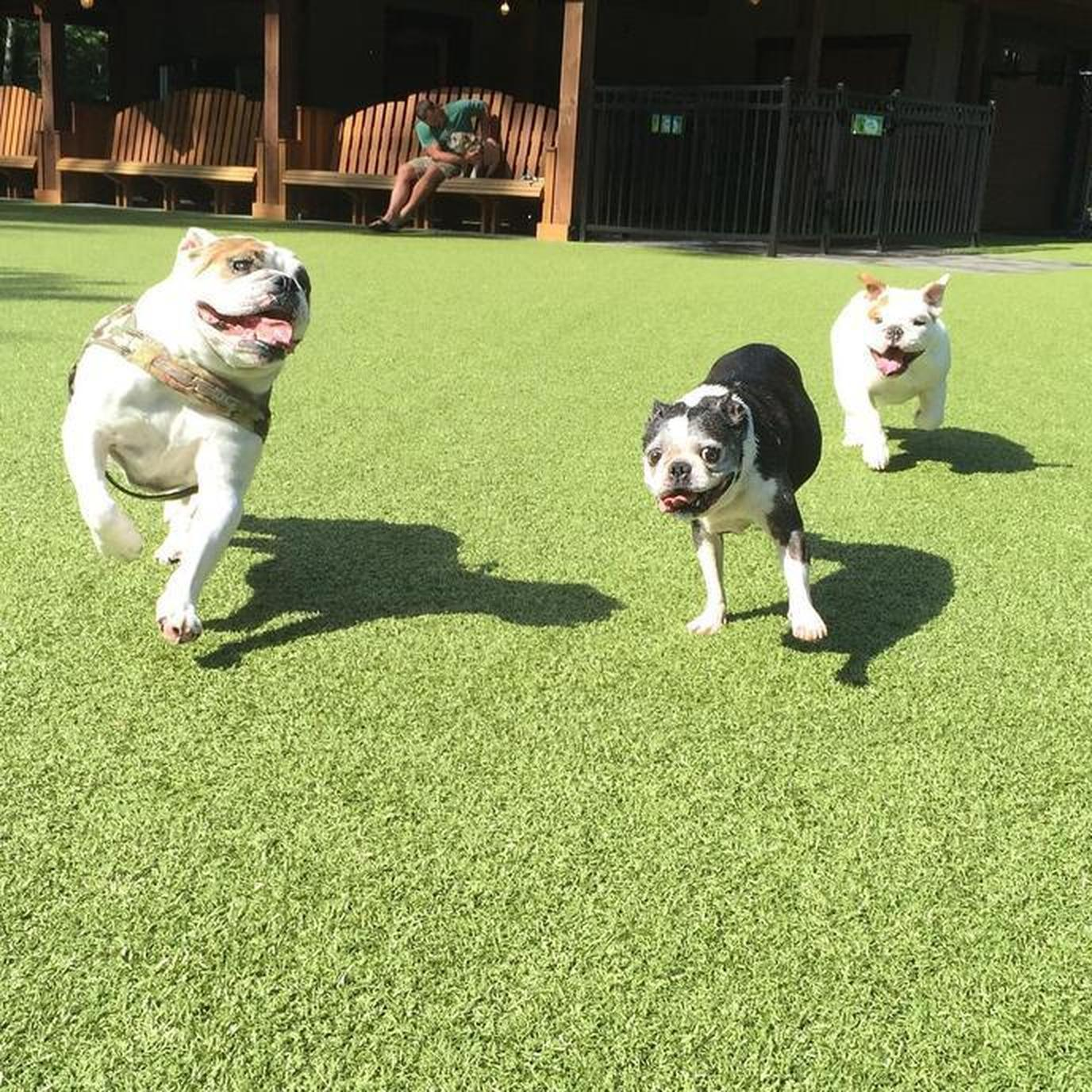 Dogs having fun at Lake George RV Park