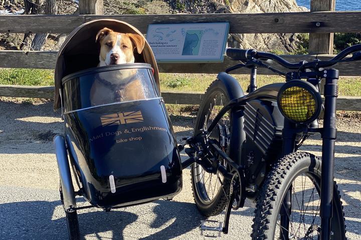 Pet Friendly Mad Dogs & Englishmen Bike Shop