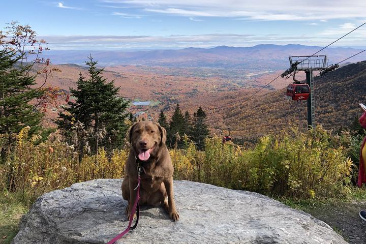 BringFido's Ruff Guide to Vermont