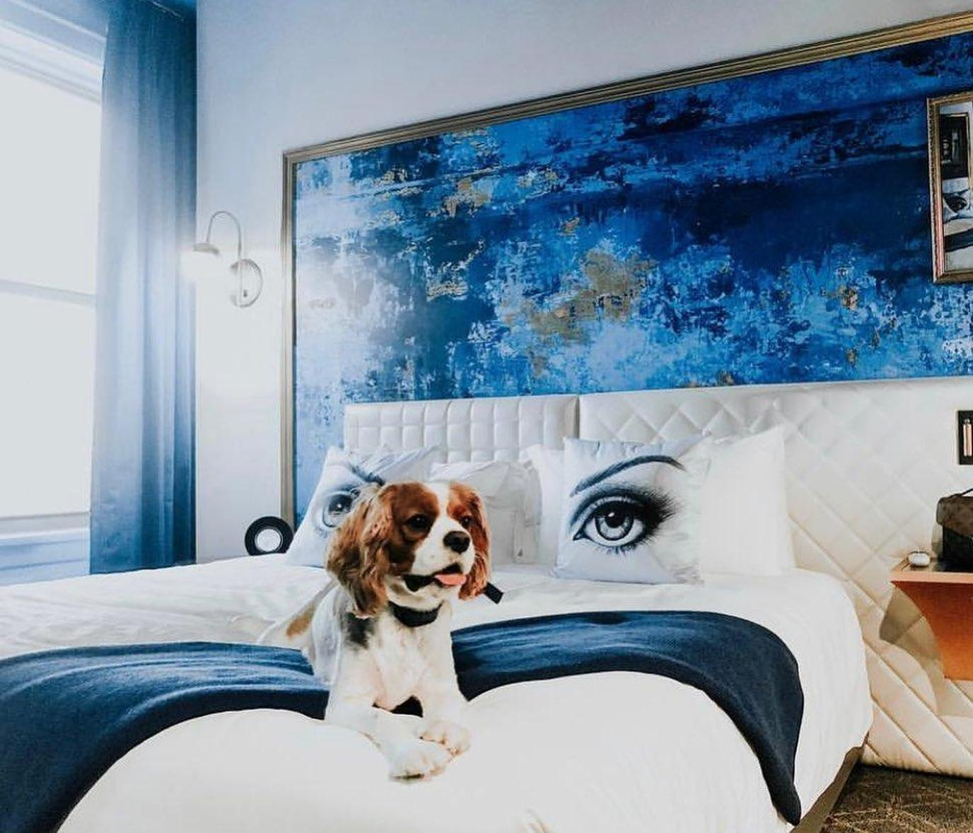 A dog enjoys the accommodations at the pet-friendly Angad Arts Hotel.