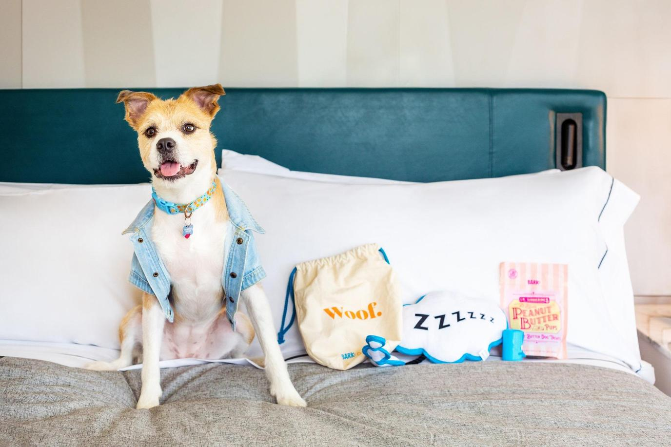 Furry guests get dog beds, bowls and dog treats at Canopy by Hilton Memphis Downtown.