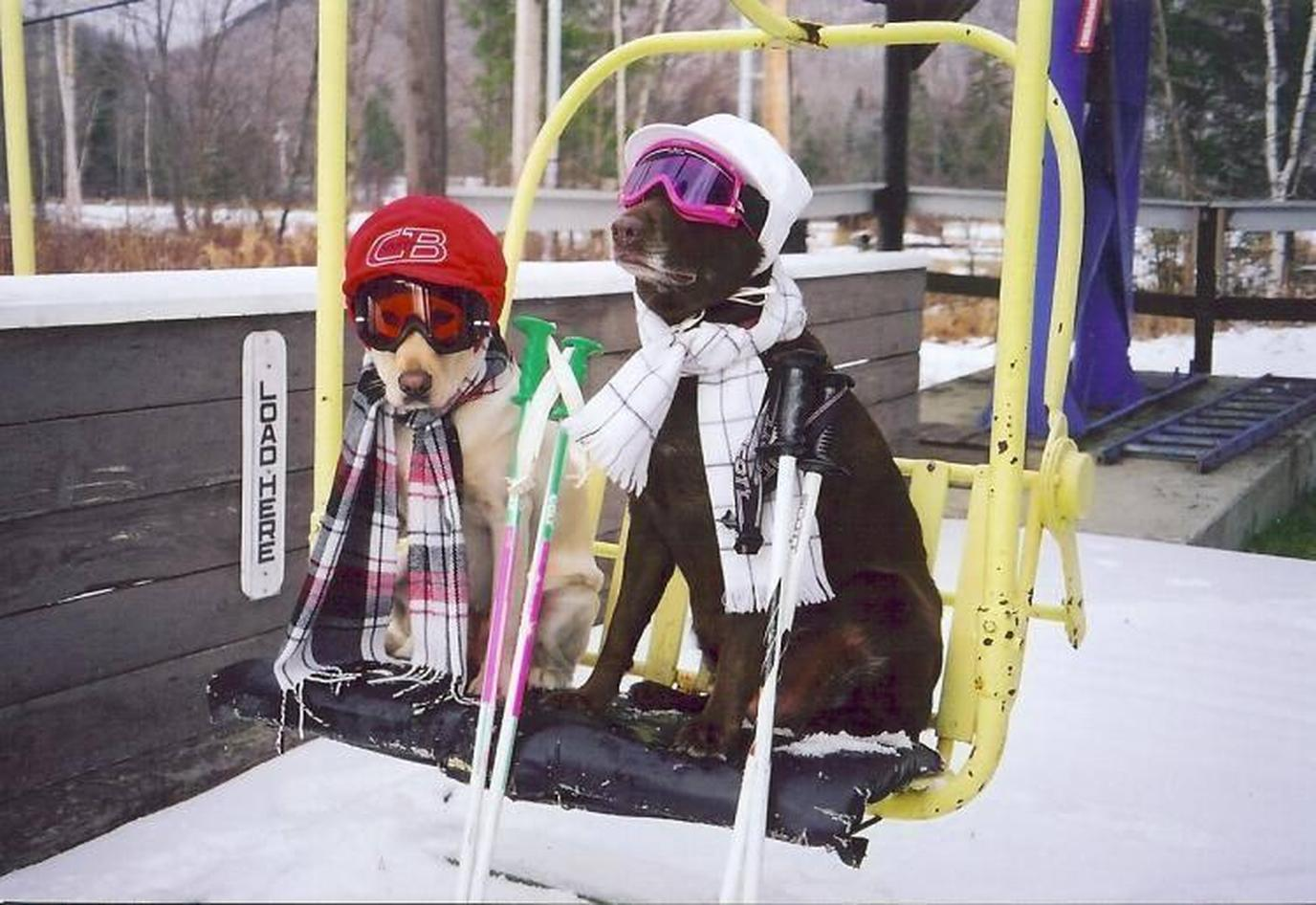 Two dogs on a ski lift in Vail, Colorado.