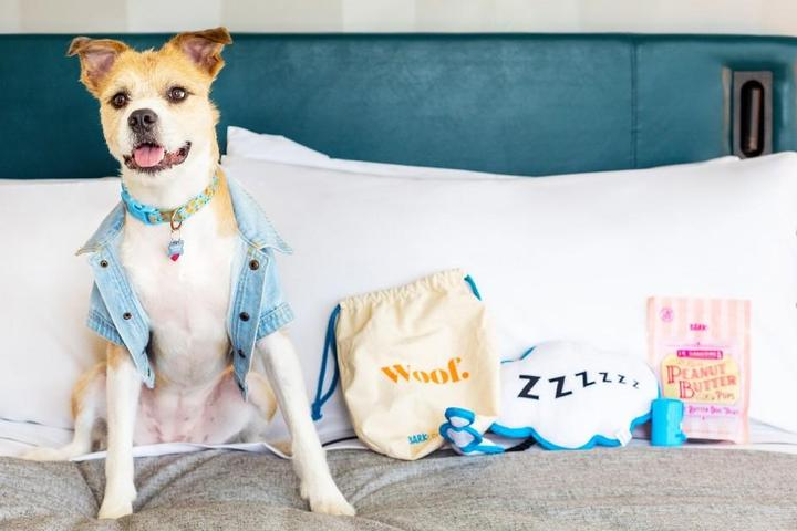 New Pet-Friendly Hotels: January 2021