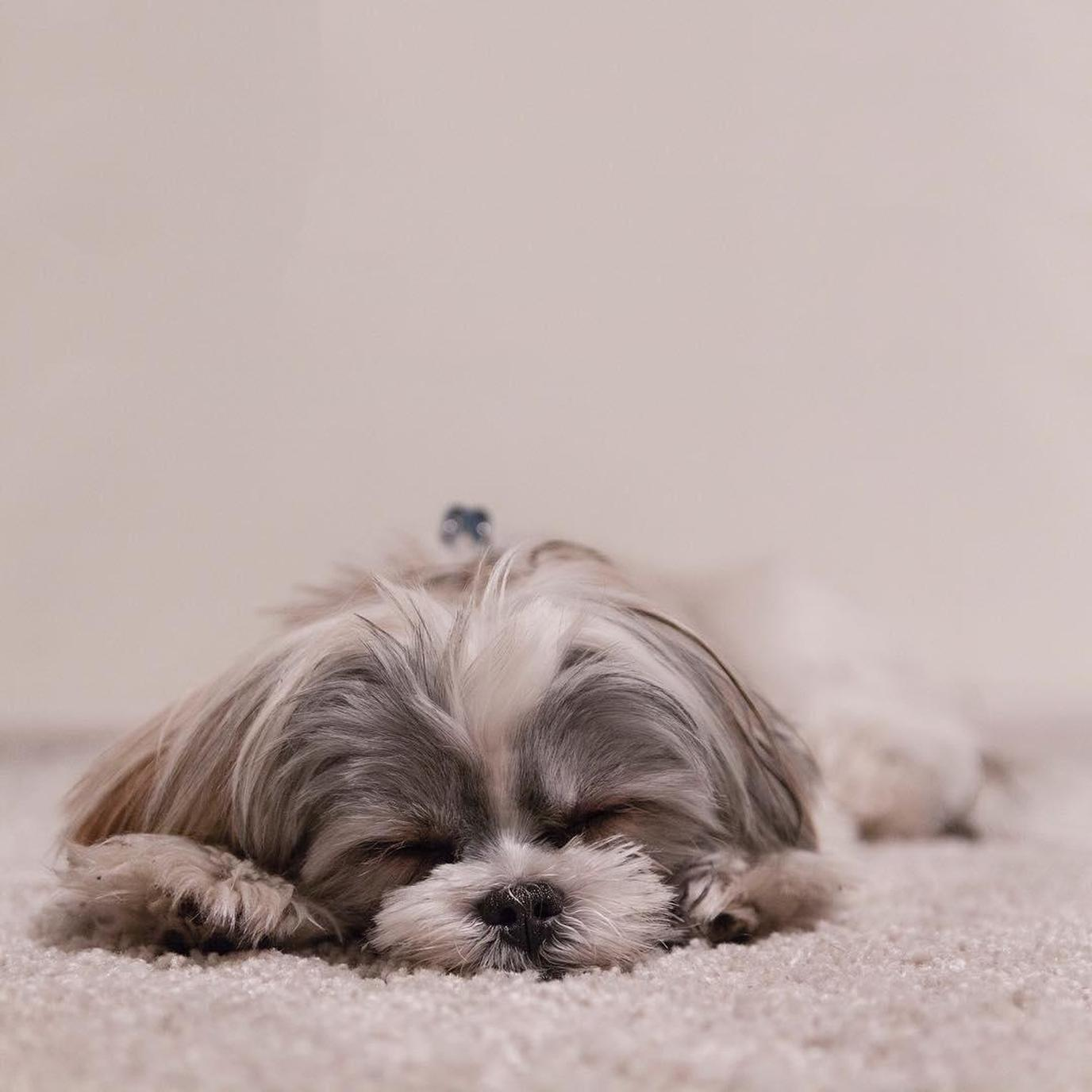 A sleepy dog rests in her room at the pet-friendly Tru by Hilton Albuquerque North I-25.