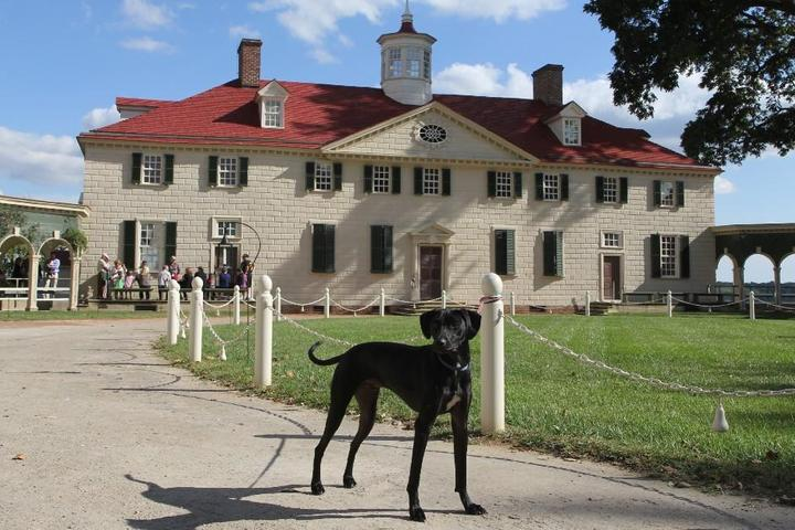 "Celebrate Our ""Fur-Fathers"" at these Pet-Friendly Presidential Estates"