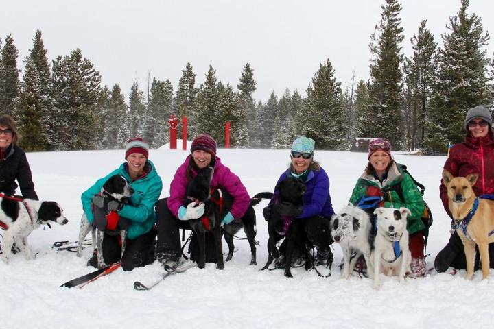 Snow Paws: Winter Sports with Fido