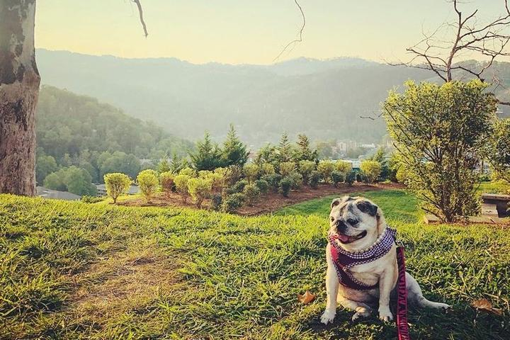 BringFido's Guide to the Great Smoky Mountains