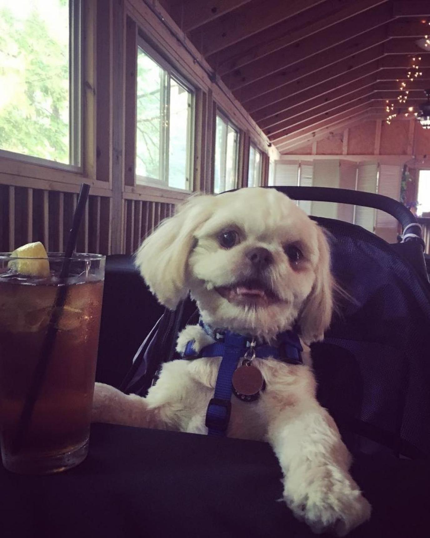 A dog relaxes in the indoor patio at Crystelle Creek, a pet-friendly restaurant.