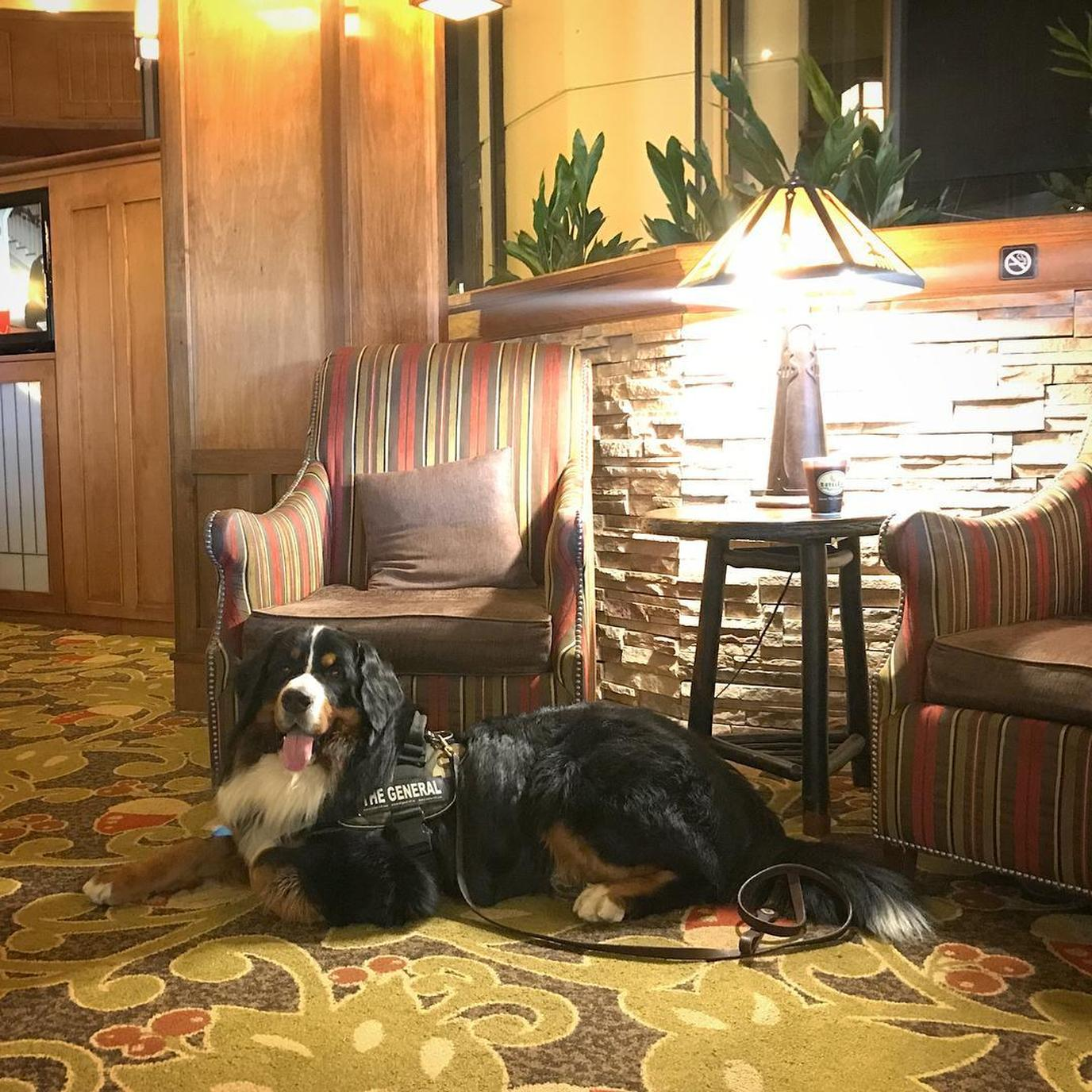 A dog relaxes in the lobby of a pet-friendly hotel in the Great Smoky Mountains