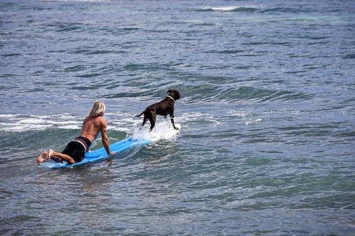 BringFido's Ruff Guide to Hawaii