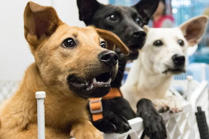 Adoptable Dogs of the Month: January 2021
