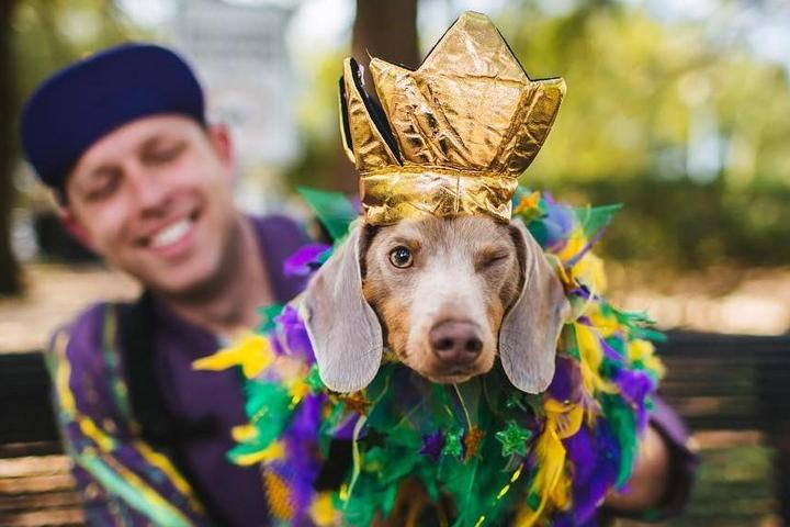 Mardi Paws 2021: How to Celebrate Safely in New Orleans