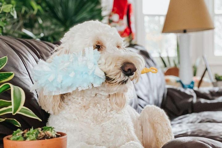 Swiffer Pet Dusters Fresh 360 Kits are good for spring cleaning.