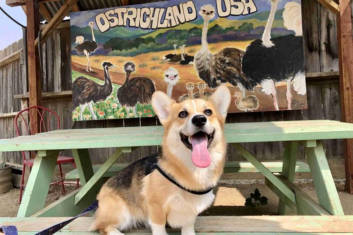 Pet Friendly OstrichLand USA