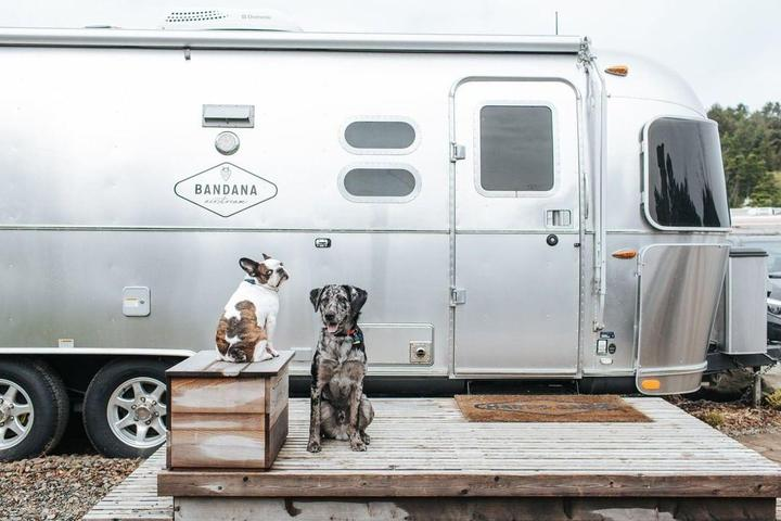 Two dogs sit in front of a vintage Airstream camper.