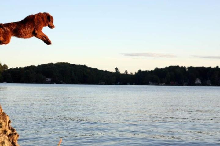 10 Dog-Friendly Private Islands in the United States