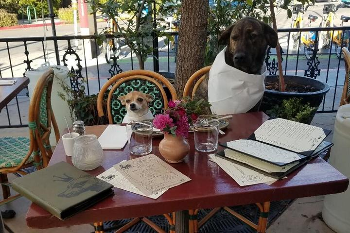 Two dogs enjoy lunch at a pet-friendly restaurant.