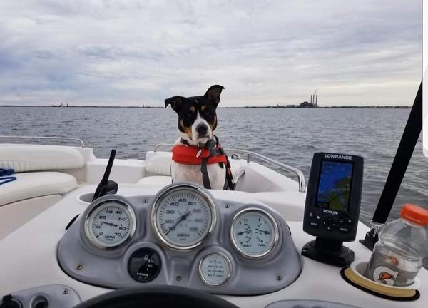 Pet Friendly Tampa Bay Captain Services