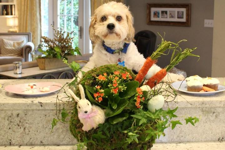 A dog gets ready for a dog-friendly Easter feast.