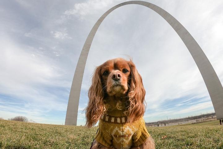 BringFido's Ruff Guide to Missouri