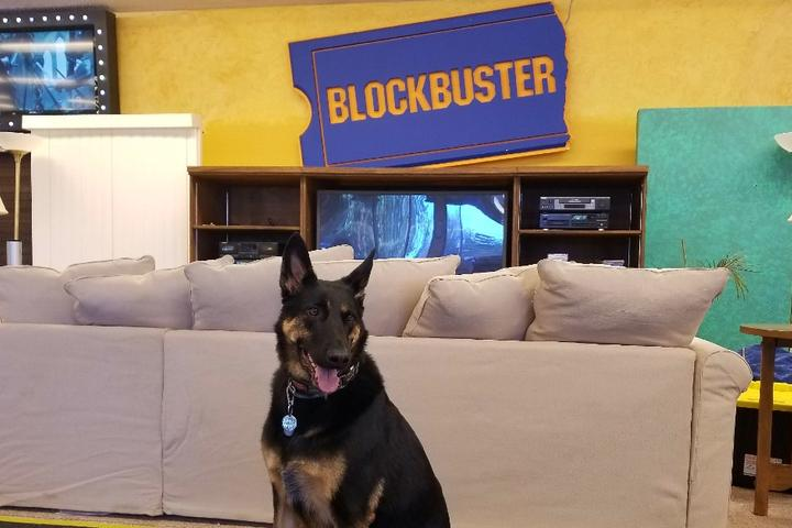 The Last Blockbuster and 6 Other Retro Dog-Friendly Attractions