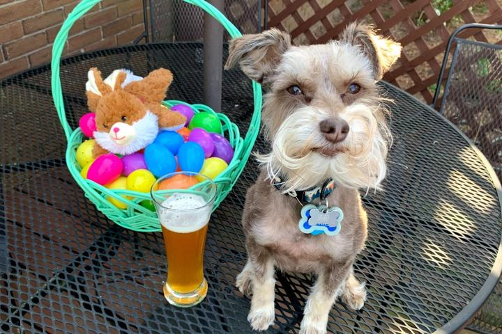 This dog is ready for Easter!