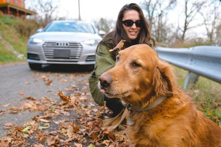 Pet-Friendly Car Rental Companies for Fido's Next Road Trip