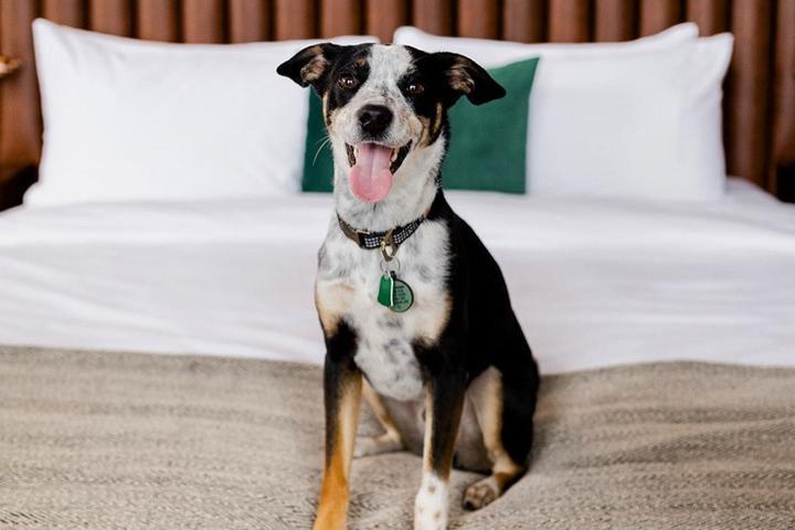 New Pet-Friendly Hotels: April 2021