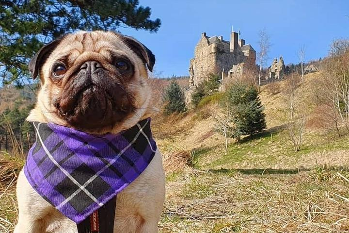The Best Pet-Friendly Vacation Rentals in the World