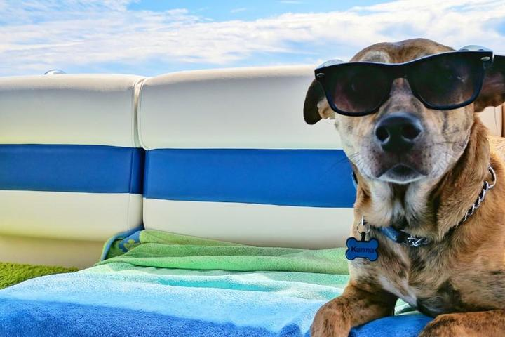 8 Happy Hour Cruises You Can Take With Your Dog