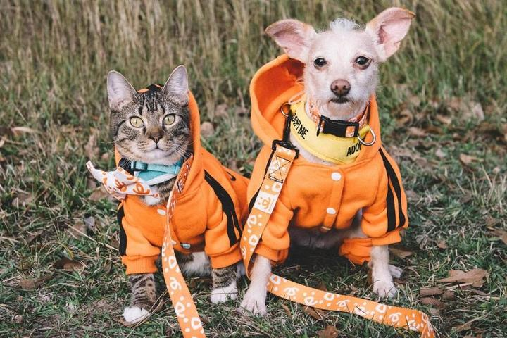 Shelter dog and cat pose for National Adopt a Shelter Pet Day.