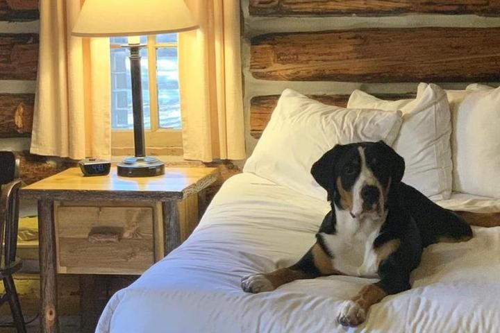 Dog lays on bed in cabin in Colter Bay Village at Grand Teton National Park.