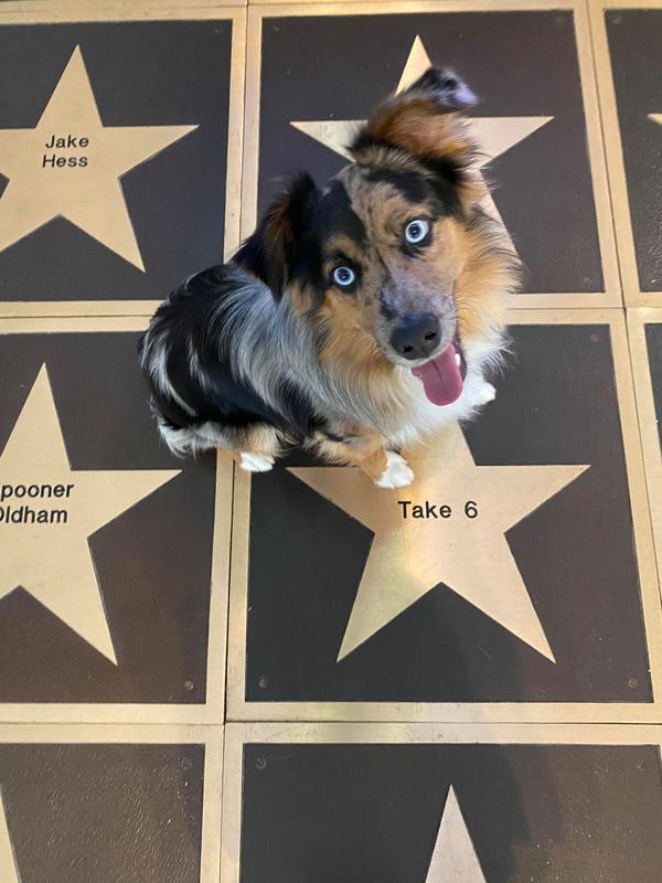 Pet Friendly Alabama Music Hall of Fame