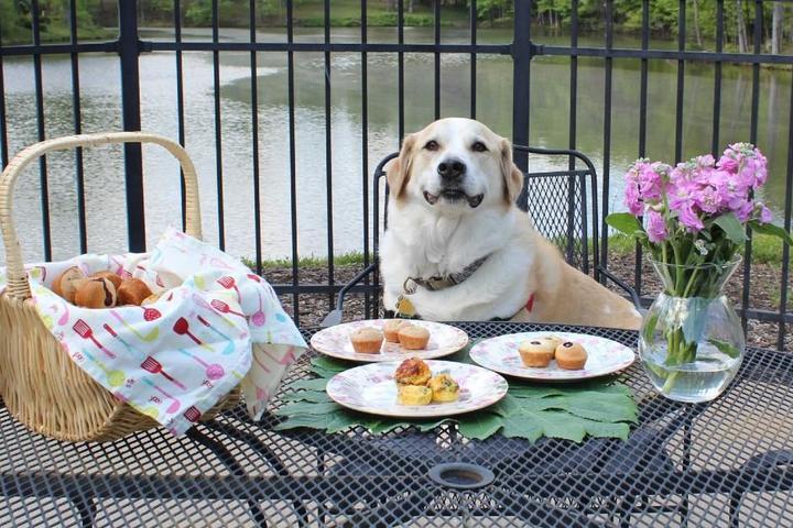Dog Treat Recipe of the Month: Muffins for Your Mutt