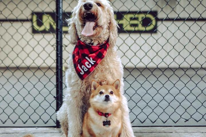 New Dog Parks and Pet-Friendly Attractions: May 2021