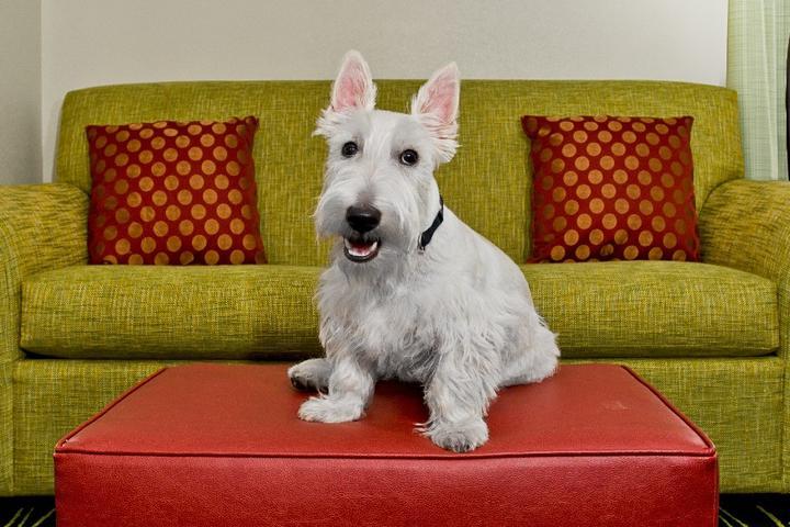 Can I Bring My Dog to Hampton By Hilton?