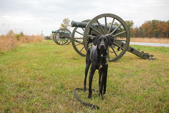 Explore U.S. Military History With Fido This Memorial Day