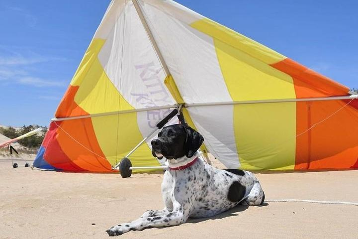 June Events to Mark on Fido's Calendar