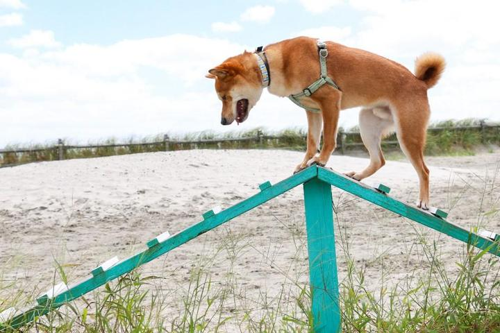 Make Waves at These 8 Beachfront Dog Parks