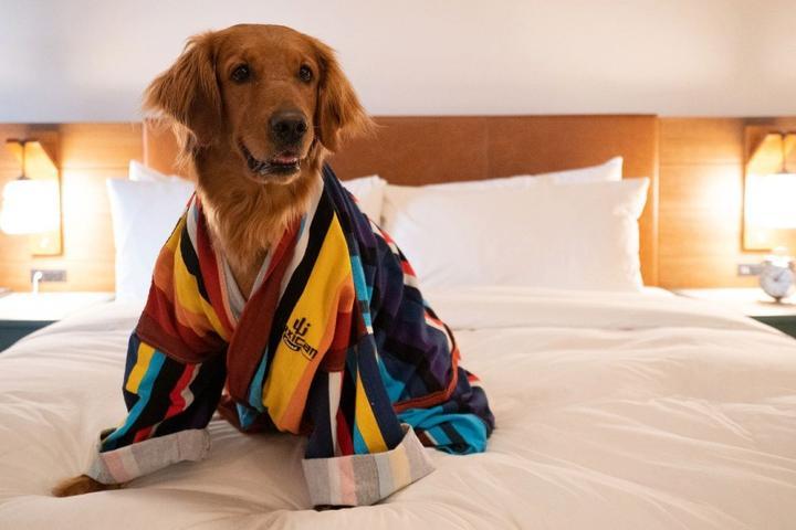 New Pet-Friendly Hotels: June 2021