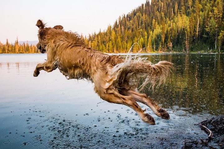 BringFido's Ruff Guide to Montana