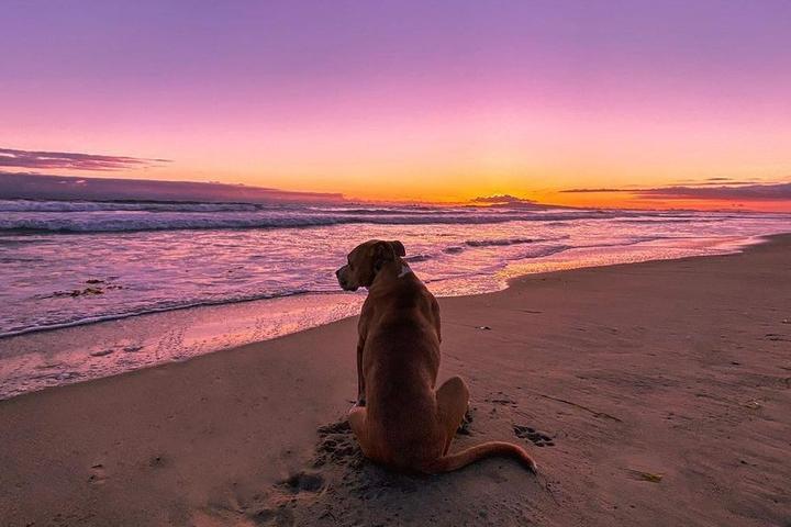 Fido's Summer Road Trip: Beaches Edition