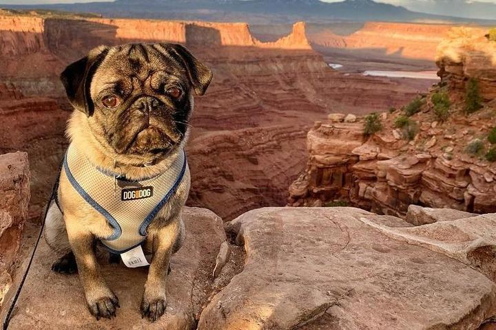Fido's Summer Road Trip: State Parks Edition