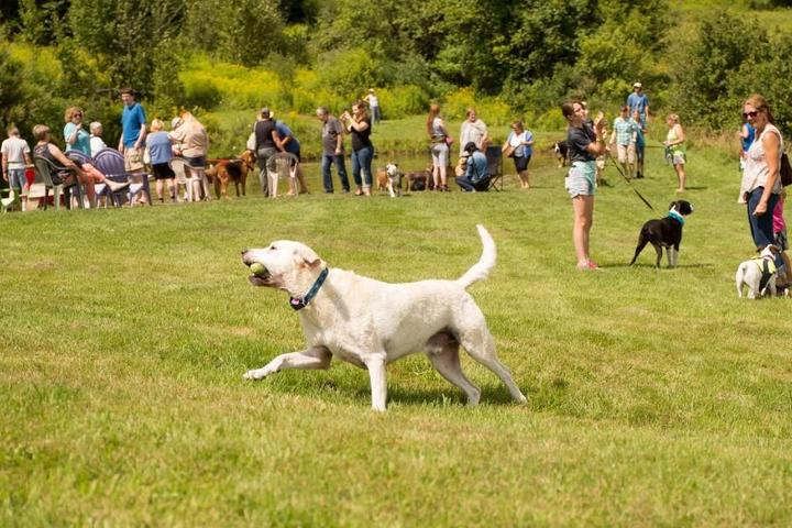 July Events to Mark on Fido's Calendar