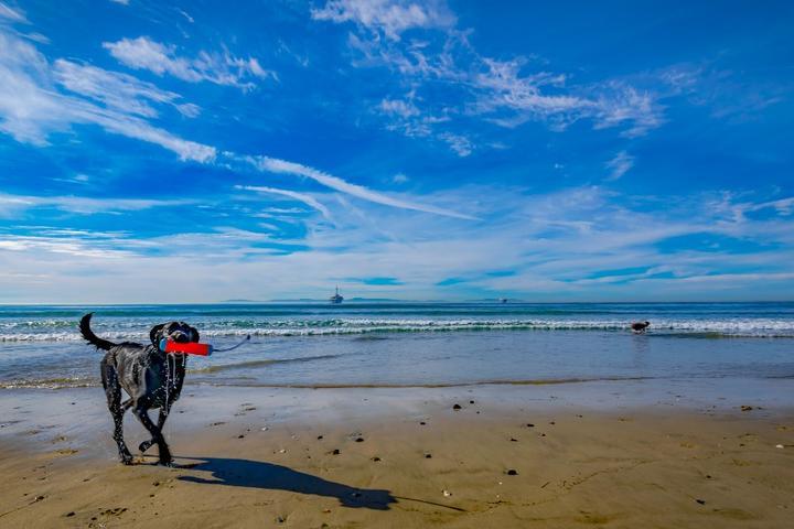 Pet-Friendly Stops Along the California Coastal Trail