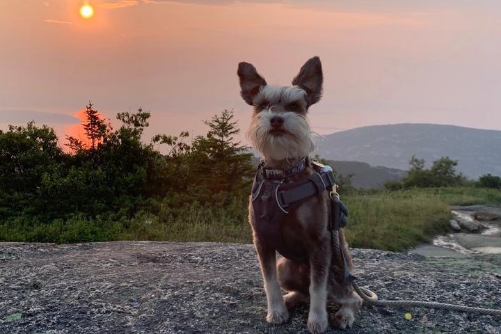 10 Unique Dog-Friendly National Park Experiences