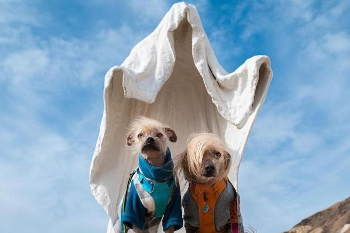 10 Fur-Raising Places to Bring Fido on Halloween