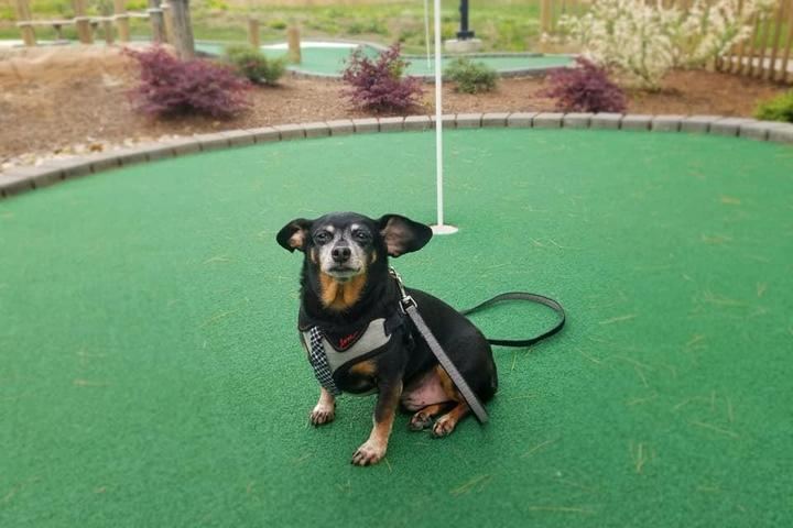 Pet Friendly Lakeview Putt & Play