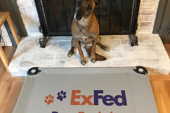 Pet Friendly ExFed Dog Training, LLC
